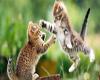 Cute Kitten Cat Fight