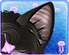 Oxu | Siamese Ears V1