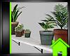 ! PLANTS ON SHELF
