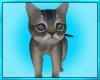 Kitten Pet Cat