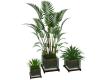 CD Lake Plants1