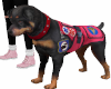Assist dog type 2 Dofus
