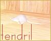 =white mouse