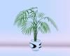 [Der] Plant