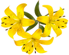Yellow Top Lillies -R