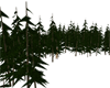 Dark pines lots of them.