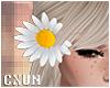 Daisy Hair R | F