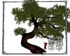 SB Twisted Old Tree