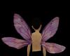 Amethyst Dragonfly wings