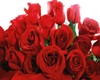 @8ll ::Rose Unique::
