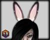 Ears v 1 Nadia furry
