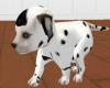 [G] anim Dalmation Puppy