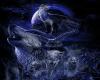Black & Blue wolf Bundle