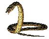 Engerek Snake