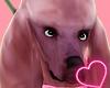 Poddle Dog [Velvet] ♦