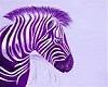 rainbow zebra club