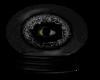 Cats Eye Watching