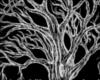 +Tree Of Life+