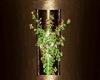 Elegant Wall Plant