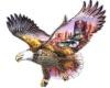 native american eagle te