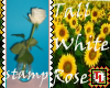 tall white rose stamp