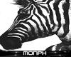 :.M.: Zebra Art