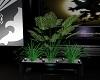 ~C&K~Plant 2