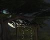 Summer Moon Tree