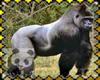 Save the Gorilla Stamp