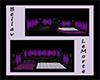 BV Purple Dream Club