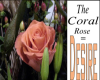 what coral roses mean