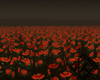 !A field of cempasuchil