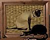 *Siamese Cat