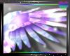 Angelic Glow Wings~ V2