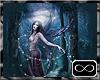 [CFD]Night Fairy
