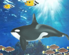 Animated orca aquarium