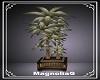 ~MG~ Patio Plant