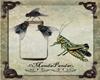 Grasshoper-Jar & Flies