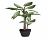 My*plant 05 cocoon