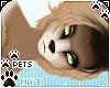 [Pets] Kimi | Leon