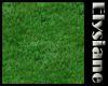 {E} Lush Green Lawn