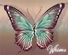 Primavera Butterflies