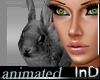 IN} Peter Bunny/Anim