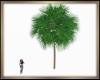 Palm Tree Derive