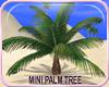 MLM Paradise Mini Palm
