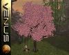 ~V~Sakura Tree /Swing