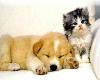 kitty and puppy sticker