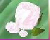 [TGUU] ROSE PIN candy