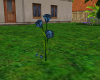 Animated Blue Roses