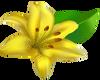 Yellow Lillie -L